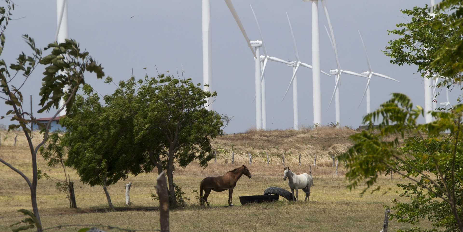 Horses graze on land in Rivas, Nicaragua, near wind turbines. The turbines are quiet, emitting a low buzz, which leaves both locals and animal life undisturbed. (Photo by Danika Worthington)